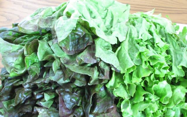 lettuce, vegetable, red leaf lettuce, green leaf lettuce, fresh, salad