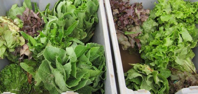 farmers' market, fresh food, lettuce, home-cooking