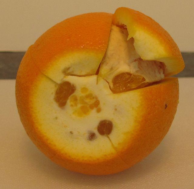 navel orange, scoring orange, cutting orange, peeling orange