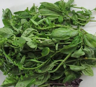 fresh basil, how to freeze fresh basil