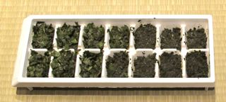 how to freeze basil, basil in ice cube tray