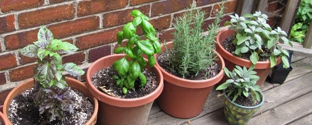 inexpensive, herbs, basil, rosemary, sage