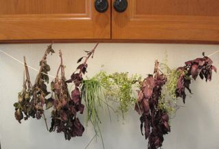 frying herbs, how to dry herbs