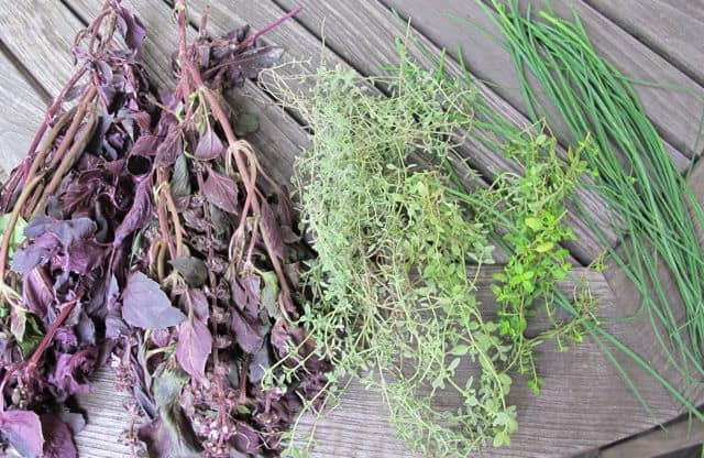 purple basil, thyme, chives cut from garden