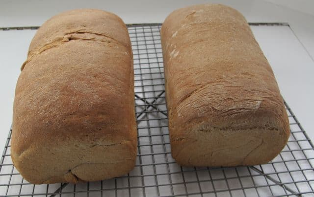 loaves of whole wheat and buckwheat bread in pan after baking
