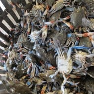 Maryland Blue Crabs and Oysters