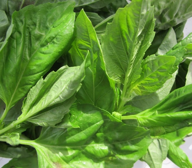 basil for brushcetta