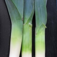Have You Ever Cooked Leeks?