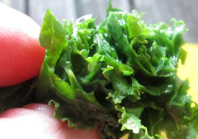 cutting-kale