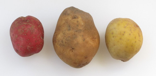 3 types of potatoes - red, russet and Yukon gold