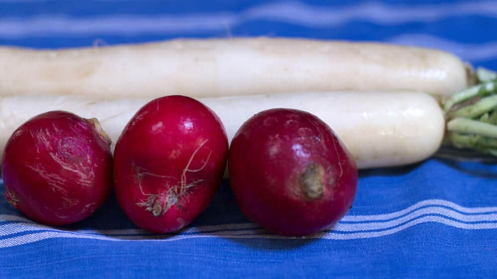 Serve radishes. Here are whole red and daikon radishes - lots of great ways to serve them. Mother Would Know