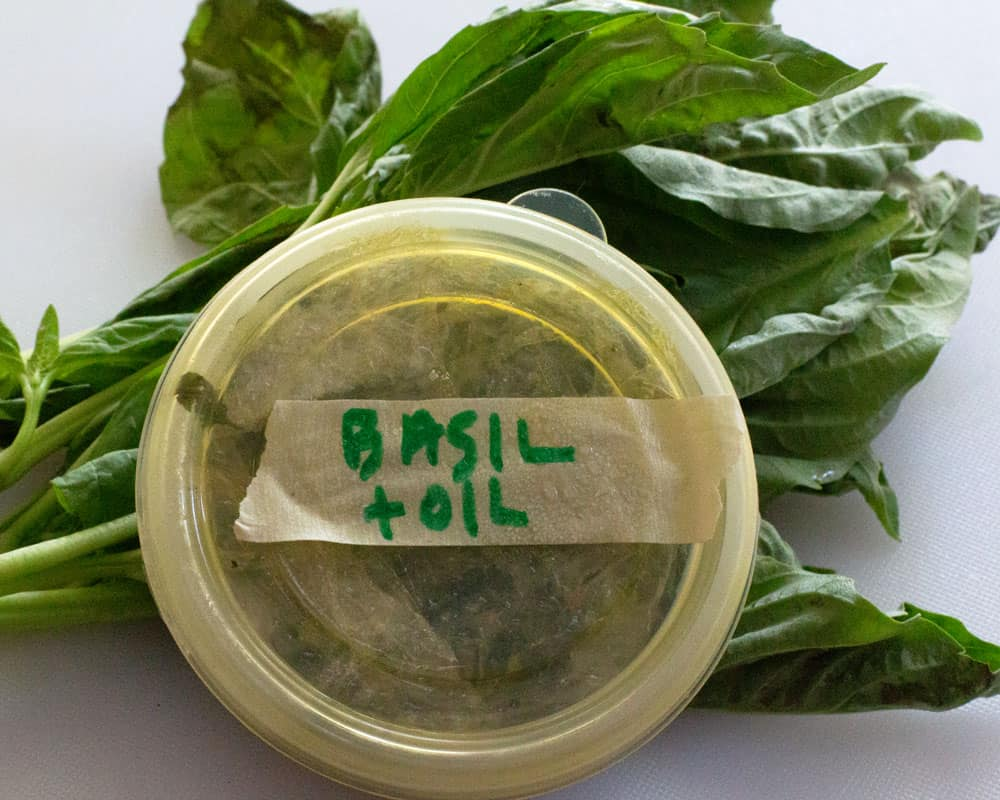 basil fresh frozen with a bit of oil in front of fresh basil